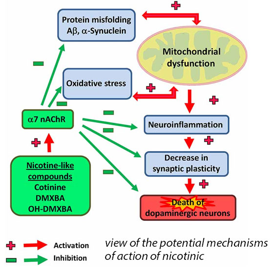 view of the potential mechanisms of action of nicotine